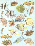 decoupage (dekupázs) papír, soft, 24*30 cm halak, csigák, kagylók 01