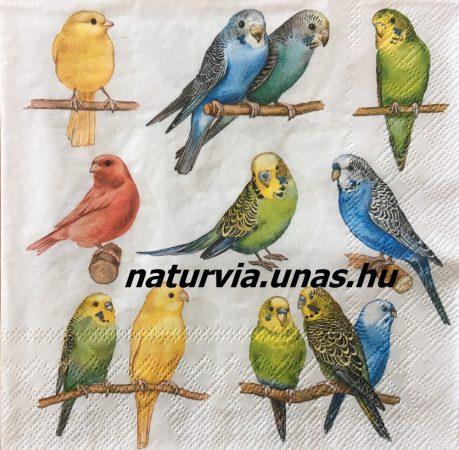 Szalvéta ÁLLAT, MADARAK 06 (papagáj)