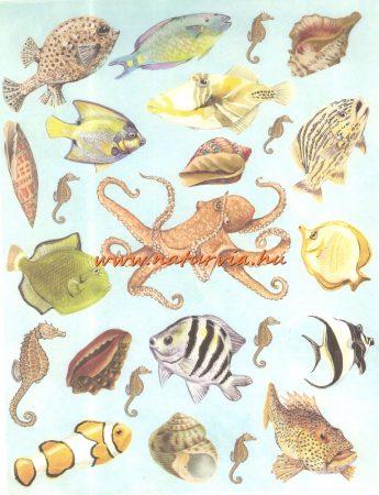 decoupage (dekupázs) papír, soft, 24*30 cm halak, csigák, kagylók 02