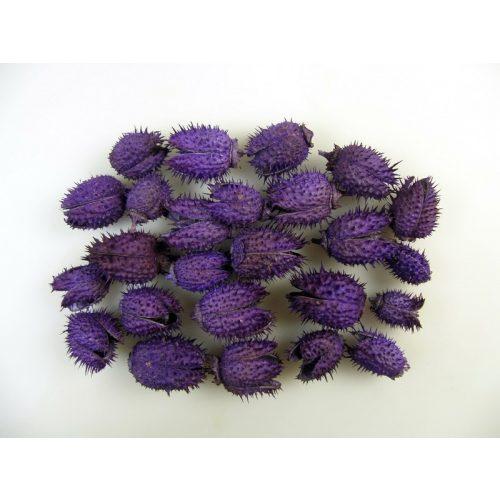 Szárított növény, BELÉNDEK (fehérített) LILA (35 db / csomag)